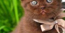 Brown,Caramel,Cinnamon,Coffee........