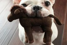 I love mischievious dogs! / by Pearls and Caramel
