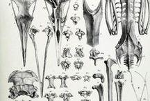bones . / by sara valle