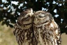 Owl Love / I am owl crazy.