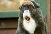 Monkeying Around / by Sandy Scott