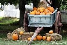 Autumn / All things autumn / by Amanda Chilcote