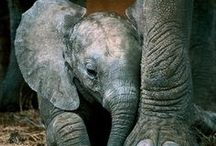 Heffalumps & Woozles / There is no animal on the planet that touches my heart more than an elephant. / by Shelby Wells
