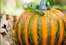 Fall Glass Harvest