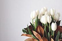 Interior: Flowers. / by lndstrm.