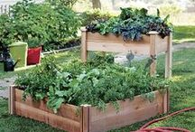 Gardening by Crate and Barrel / Handcrafted in the USA of Western red cedar with sturdy corner posts, our raised garden beds by Gronomics assemble in minutes without tools on a modular design you can configure to your space. / by Crate and Barrel