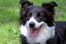 Dogs Health / All about dogs and their health