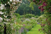 My future backyard  / by Audra Richards