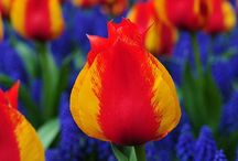 Flowers / by Karen Johnson