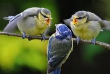 Birds / by Karen Johnson
