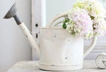 Shabby Chic / by Steph Francis