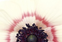 les fleurs / flowers