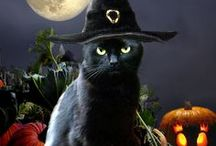 Halloween  / by Chellie Longstreth