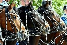 Horses 3 , Hester , Pferde , Soquili , Chevaux , Caballos , 馬 , лошади , Paardjes / by Christa Gettys