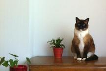 Cat / by Suprême Castillon