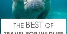 Best of Travel For Wildlife / A collection of our best posts. From wildlife related articles to travel posts, and cool animal facts. What animal encounter are you looking for?