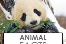 Animal Facts / Learn about animals as we explore interesting and cool animal facts, from polar bears to ants.