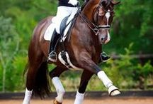 Dressage / I LOVE horses and Dressage is my ridding style of choice!