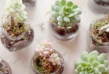 Cactus & Terrarios