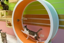 Inspiration - Cat Room / ideas, inspiration and products for the cats / by Susie