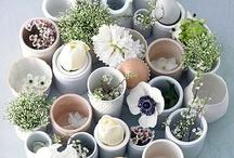 Plants / by Mariah Elizabeth Ann