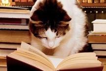 Animals - Cats Reading