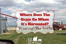 Crops & Grains / Crops & Grains