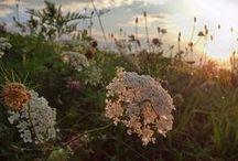 Summer / by Sari Peltonen