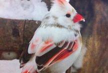 My birds / by Kathy McFarlin