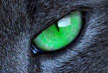 Animals - Eyes Have It