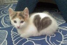 kitty! / by Macayla Graham