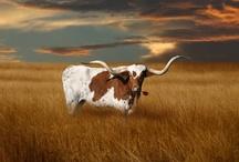 Texas / by Laurette Conkling Walton
