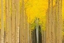 hello {yellow}