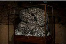 Sculpt / by Beatrix Silverstein