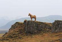 EQUESTRIAN / Horses- my favorite.