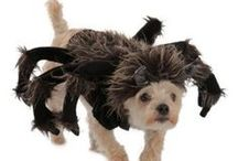 Pet Halloween Costumes / Boy...Halloween is really going to the dogs! And we couldn't be happier! ;) Here are some cute, silly, cuddly, quirky costume ideas for your pets.