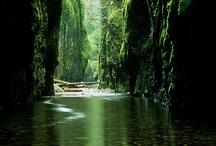 Oregon esque / by Diana Rasmussen