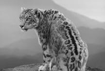 WILD LIFE / All animals wild and free