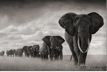• My Elephants •
