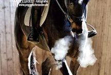 Equestrian Life - Horses / by Kathryn Leigh Buford