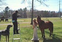 Behind the Scenes of SDP! / Behind the Scenes of Shalese Danielle Photography, a Richmond VA wedding photographer.