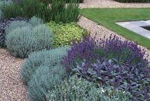 Homes Exterior / garden is zone 10a / by Lisa Jones