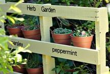 outside ideas / Inspiration and how to's for: gardening, container gardens, landscaping, outdoor kitchens and living spaces.
