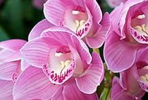 LOVING ORCHIDS
