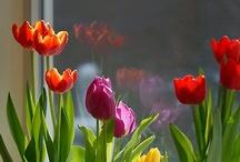 Plants plants plants / by Mandala CCeron