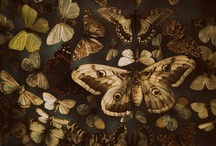 Angels and Insects / by Cate Lombardo