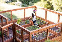 Edible Garden / How to grow a home, backyard gardening, growing fruit and veg, edible garden, veggie patch