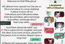 Club Chihuahua / Come join us on Facebook! Show off your fur babies, share ideas and experiences, trade or sell dog clothes,   and lots of laughter #clubchihuahua #chihuahuagrou / by Susie Lopez