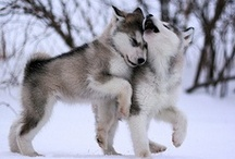 cute critters.