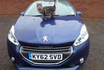 Peugeot <3 Pets / #pets #animals #cat #dog / by Peugeot Official